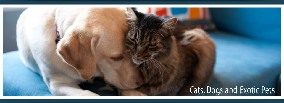 Cats, Dogs and Exotic Pets - Yellowknife Veterinarian Clinic